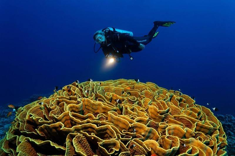 Egypte_duiken_liveaboard_rode_zee_emperor_divers_blue_planet__the-oasis-e_oa-kelchkoralle