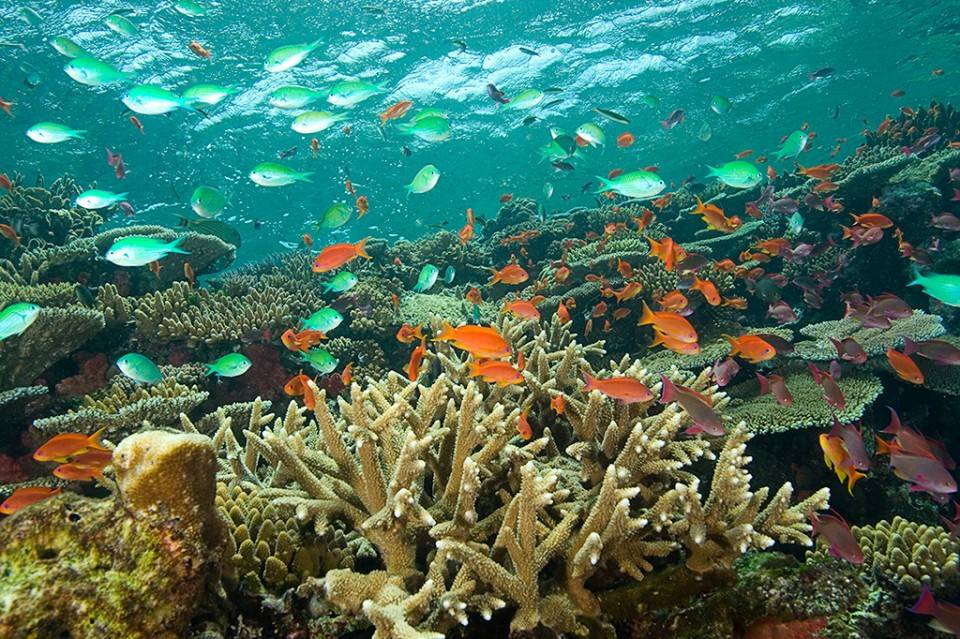Fiji_duiken_IslandDancer_Beqa_Lagoon_colorful_corals