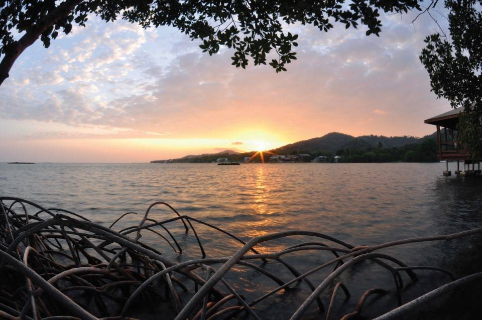 Honduras_duiken_Anthoneys_key_resort_Roatan_mangrove_sunset
